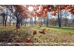 Сильный ветер ожидается в Беларуси 3 ноября