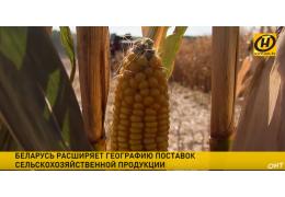 Сельхозгод завершен: 9 миллионов тонн зерновых собрано!