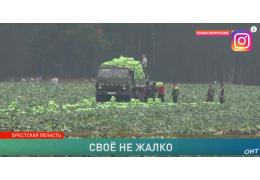 Фермер раздал сельчанам свой урожай бесплатно! История о хороших людях