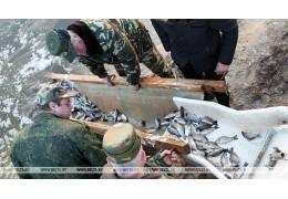 БООР за год выпустило в 16 водоемов более 40 т рыбы