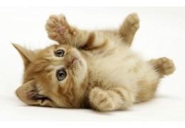 Хочешь продать котенка в хорошие руки… не забудь уплатить налог