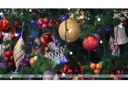 Главная новогодняя елка Бреста будет на 2 м выше предыдущих
