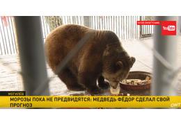 Медведь Фёдор зимы не обещает
