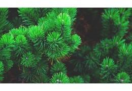 В столице внедряют новые подходы к утилизации новогодних деревьев