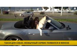Такси для собак: необычный сервис стартовал в Минске