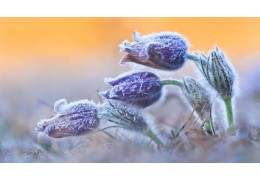 Похолодание ночью и усиление ветра днем ожидаются в Беларуси 16 марта