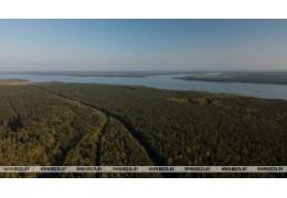 Леса занимают почти 40% территории Беларуси