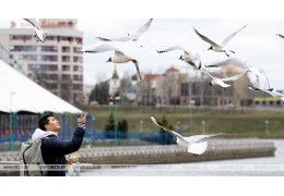 ФОТОФАКТ: Чайки в Минске
