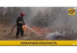 Горят дачи и леса! В Беларуси увеличилось число пожаров. Виноваты люди?