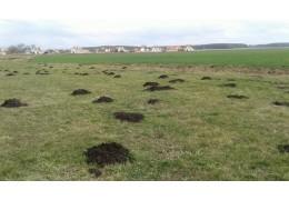 Ранние яровые посеяли в Беларуси почти на 70% площадей