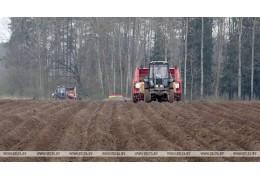 Брестская, Гомельская и Гродненская области начали сев овощей