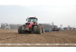 Ранние яровые посеяли в Беларуси на 84% площадей