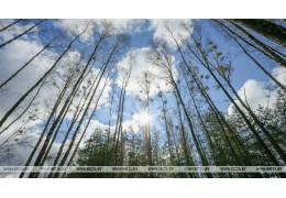 Запрет на посещение лесов действует в 74 районах Беларуси