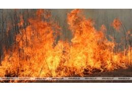 Подразделения МЧС тушат пожар на границе Дрогичинского и Березовского районов