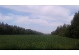 КГК Гомельской области изучил вопросы сохранения почвенного плодородия земель