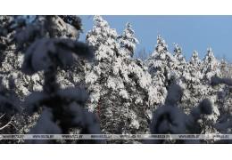 До -16°С и гололедица прогнозируются в Беларуси 1 февраля